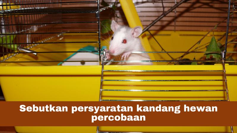 Sebutkan persyaratan kandang hewan percobaan