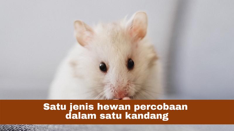 memelihara hewan percobaan dalam kanang