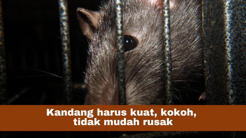 syarat kandang hewan uji